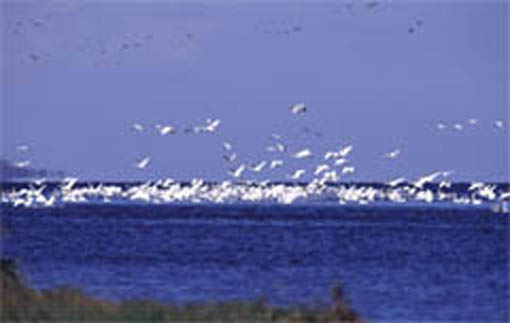 important bird areas in japan �������������