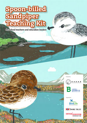 Spoon-billed sandpiper teaching kit