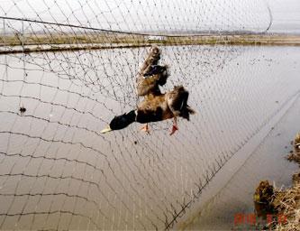 第11次鳥獣保護事業計画の基本指針の見直しに関する意見