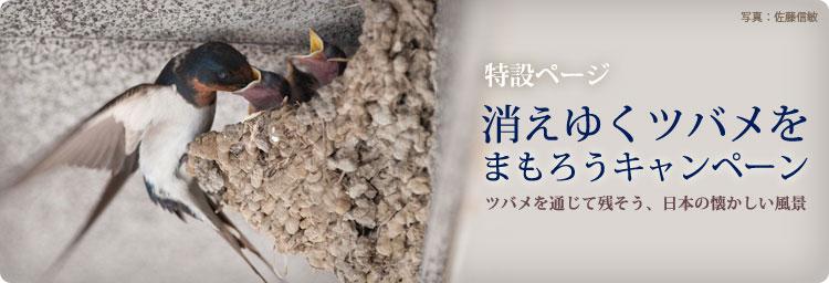 日本野鳥の会「消えゆくツバメをまもろうキャンペーン」特設ページ